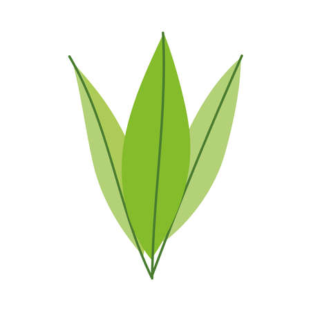 branch leaf foliage isolated icon white background vector and illustration