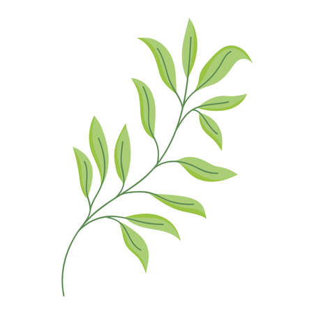 branch leaves foliage decoration isolated icon white background vector and illustration