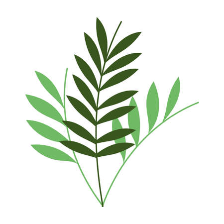 green branches leaves foliage botanical isolated icon vector illustration
