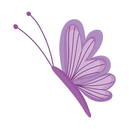 beautiful butterfly insect isolated icon white background vector and illustration