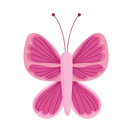 beautiful butterfly delicate insect isolated icon white background vector and illustration Ilustração