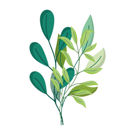branch leaves foliage isolated icon white background vector and illustration Illusztráció