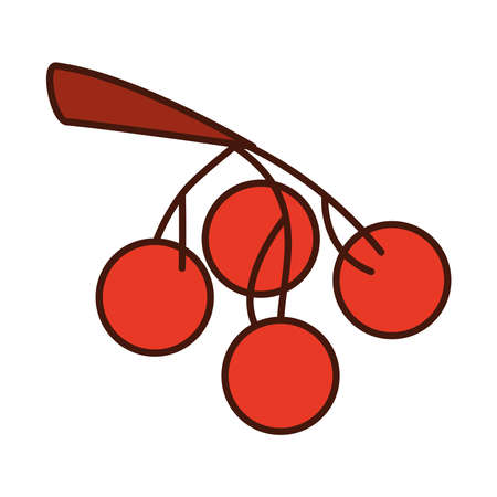 fruits cherries in the branch tree vector illustration line and fill icon