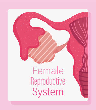 female human reproductive system, women physiology health vector illustration