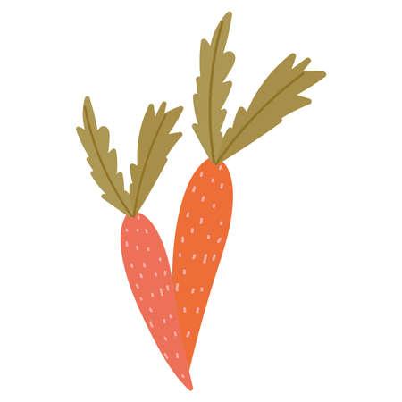 carrots vegetation fresh harvest isolated icon style vector illustration
