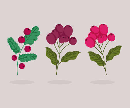different branch trees with coffee seeds cartoon vector illustration Ilustracja