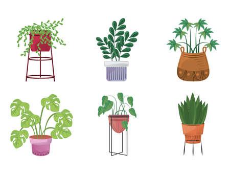 set ornamental plants in pots garden decoration vector illustration