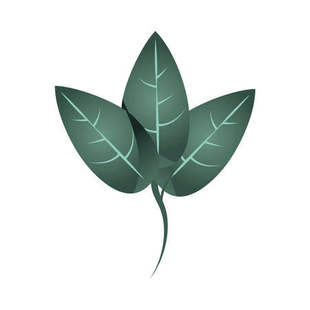 branch foliage organic nature plant icon isolated vector illustration