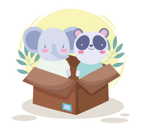cute koala panda on box
