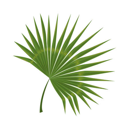 tropical branch leaves icon isolated