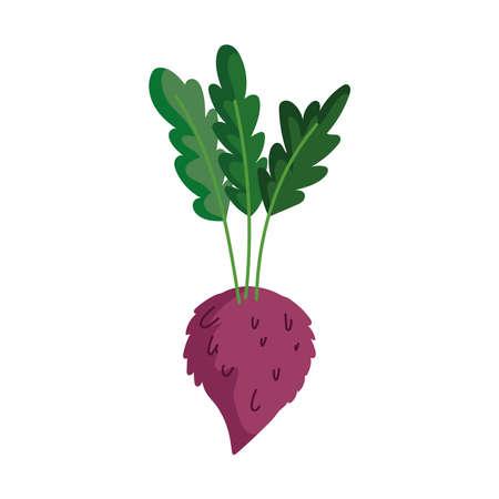 radish vegetable fresh isolated icon