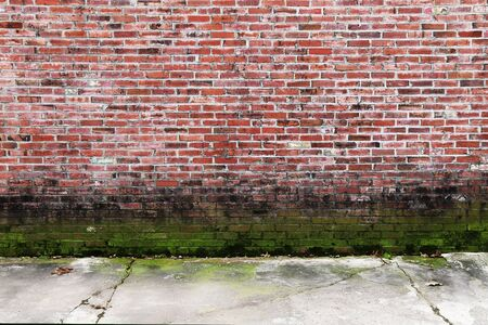 a colorful old brick garden wall with green moss growth and sidewalk