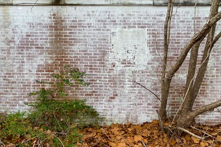 a whitewashed brick back garden wall with overgrown trees and moss Stock Photo