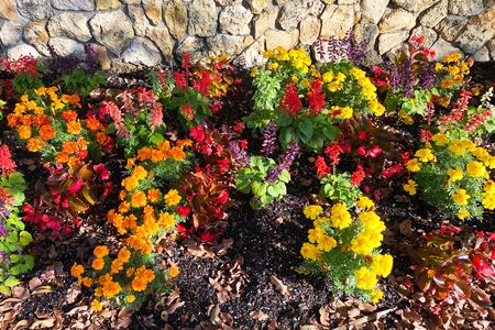 a patch of marigolds in a garden path next to a stone wall with fall leaves and shadows Stock Photo