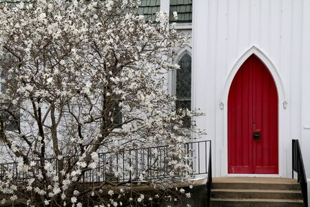 a vintage white wood church red arch doors with budding dogwood