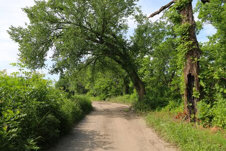 a beautiful tree lined dirt path road with overhanging trees on a sunny day