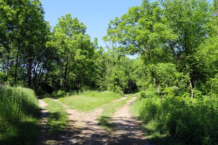 two dirt road paths heading into a beautiful forest glade on a sunny day