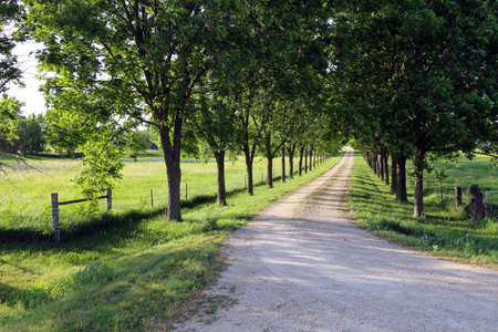 a beautiful tree lined dirt driveway leading through a lush meadow Stock Photo