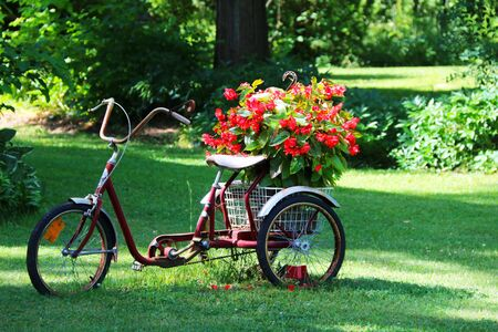 a beautiful old display flower planter three wheels bicycle bike in a bright grass yard