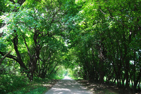 a beautiful serine view of a lush forest with a road going into the distance on a bright sunny afternoon