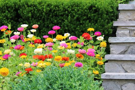 a very beautiful colorful red pink yellow orange white bright bed of spring flowers next to a stone steps path