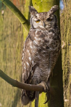 Owl sitting on tree branch Stock Photo - 5994857