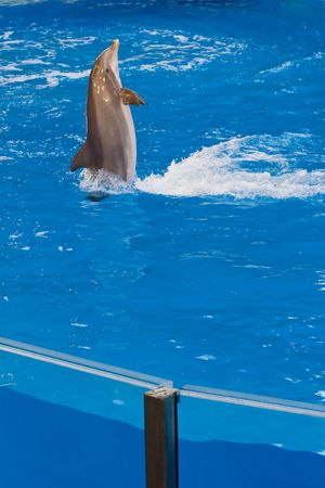 dolphin swimming backward in pool photo