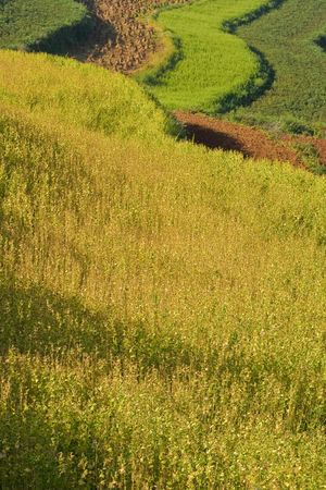 terraced fields in yunnan, china (2) photo