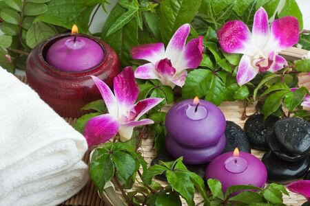 thermotherapy: spa composition in tropical green setting