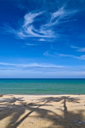 Shadow of palms on a beach
