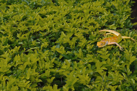 A salamander on bushes of leaves Stock Photo