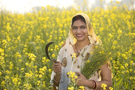 Rural Indian woman harvesting rapeseed in field Foto de archivo