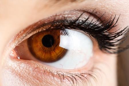 ojos marrones: Ojos de una mujer hermosa Foto de archivo
