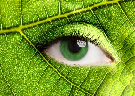 eyes open: Green leaf looking at you Stock Photo