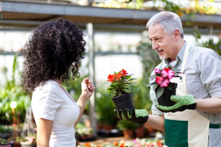 houseplant: Portrait of a smiling greenhouse worker giving a flower pot to a customer Stock Photo