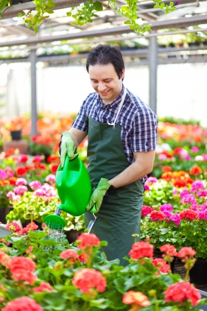 floriculture: Portrait of a greenhouse worker watering plants