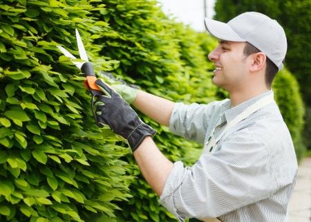 Professionelle Gärtner Beschneiden einer Hecke