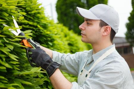 pruning shears: Professional gardener pruning an hedge Stock Photo
