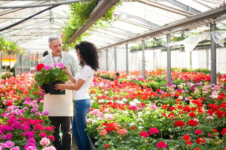 floriculture: Portrait of a greenhouse worker giving a plant to a customer