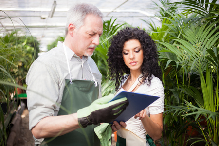 Workers examining plants in a greenhouse photo
