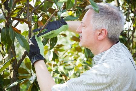 bush trimming: Professional gardener thinking to prune a tree Stock Photo