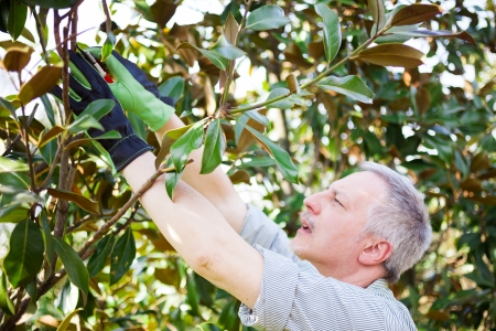 Professional gardener pruning a tree photo