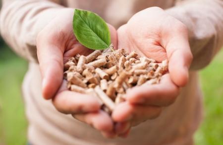 biomass: Man holding wooden pellets