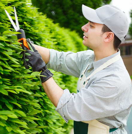 Professional gardener pruning an hedge photo