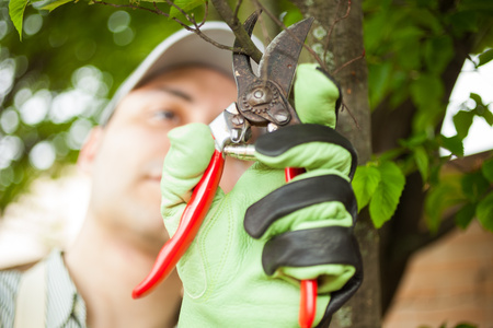pruning shears: Close-up of a professional gardener pruning a tree Stock Photo