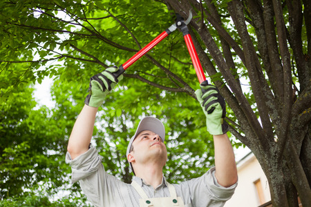 tree cutting: Professional gardener pruning a tree