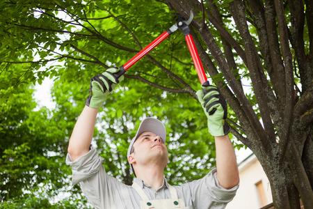Professionele tuinman snoeien een boom Stockfoto - 32258800