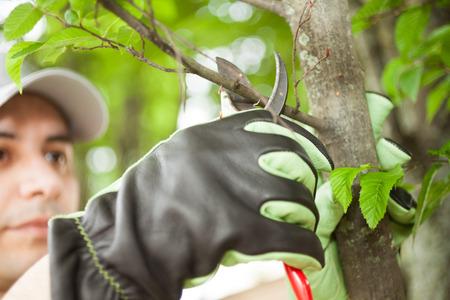 木を剪定プロの庭師のクローズ アップ