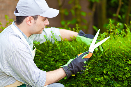 gardening: Professional gardener pruning an hedge Stock Photo