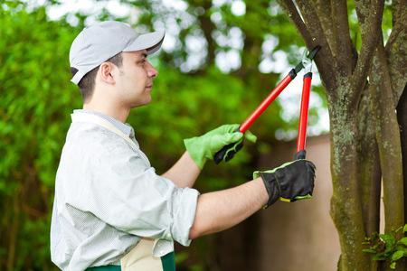 pruning shears: Professional gardener pruning a tree